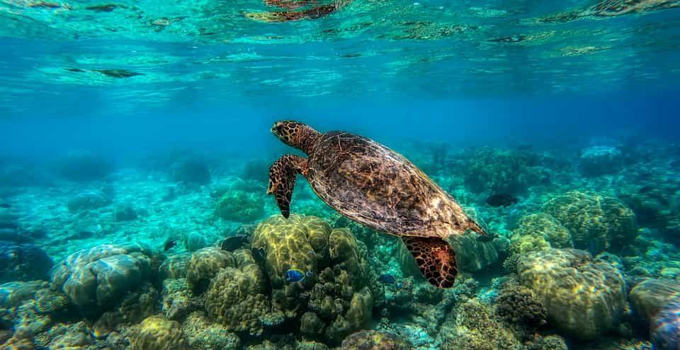 Partir en plongée aux Maldives, une destination de renom à privilégier